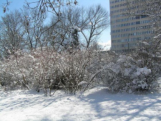 Pożegnanie zimy w Parku Skaryszewskim