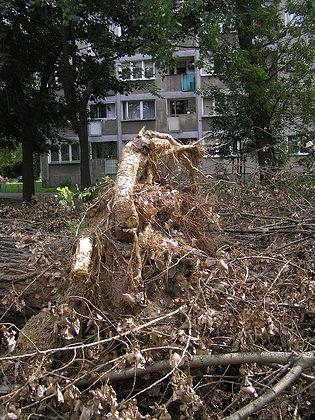 Skutki nawałnicy na ul. Olszowej