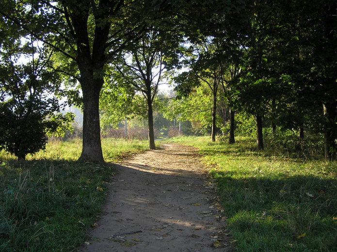 Drzewa nad jeziorkiem Gocławskim
