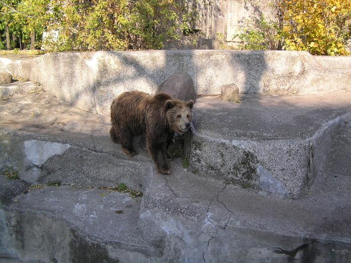 Wybieg dla niedźwiedzi na Pradze