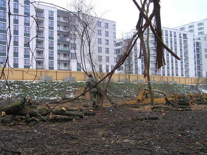 Wycinka drzew na Gocławiu
