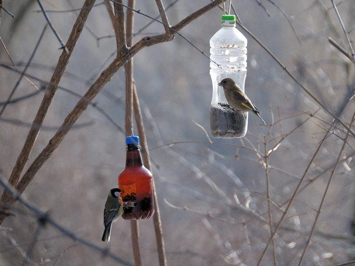 Zimowe Ptakoliczenie 2014