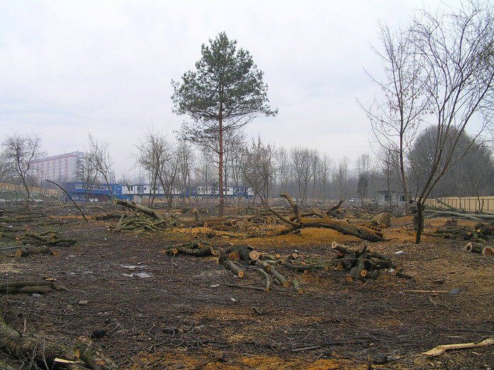 Szczątki żołnierzy na Przyczółku Grochowskim?