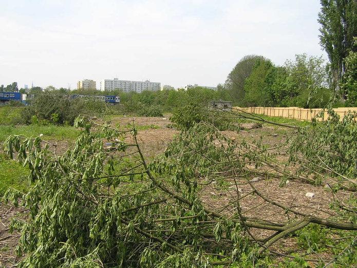 Drzewa wycięte przez Dom Development