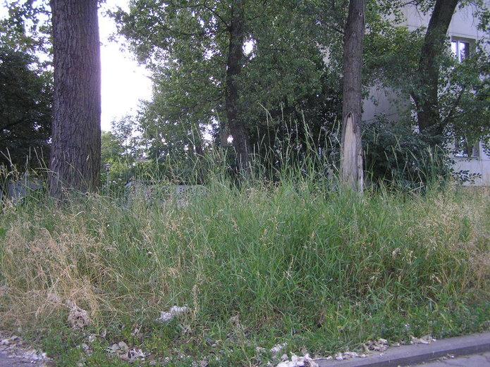 Niekoszona trawa na Grenedierów