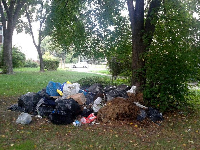 Problem śmieci na ulicy Kinowej