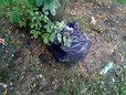 Śmieci na ulicy Kinowej