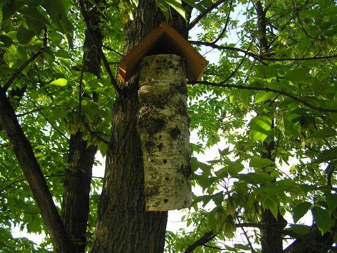 Hotel dla owadów na Pradze Południe