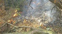 Ogień wParku Skaryszewskim, fot. ZOM