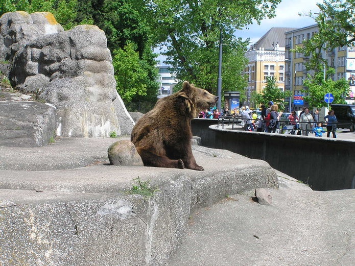 Wybieg dla niedźwiedzi na Pradze Północ