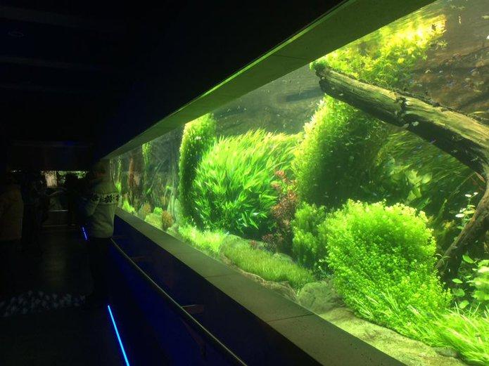 Akwarium wZOO, fot. Michał Olszewski