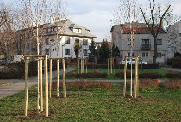 Nowe drzewa na Pradze Południe