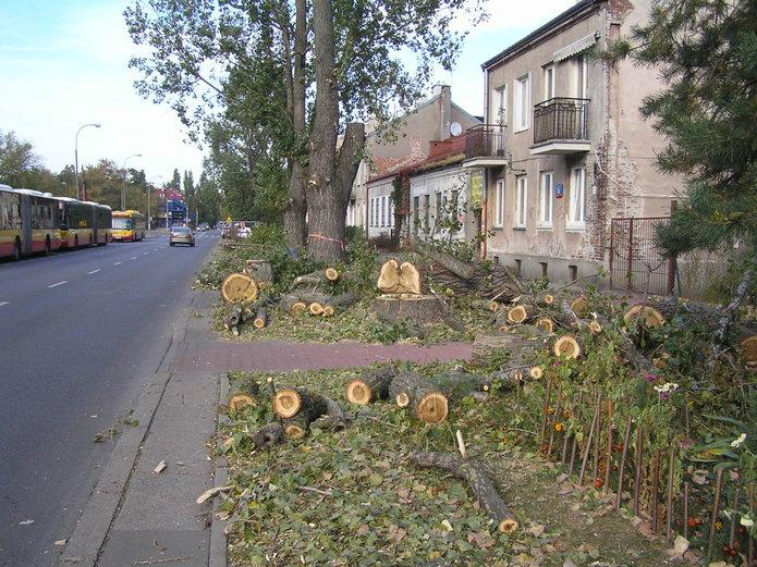 Wycinka drzew na ulicy Chłopickiego