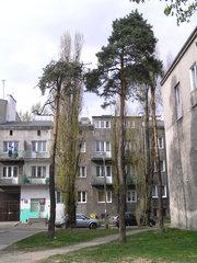 Lasek na Grochowie